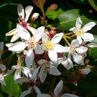 Qué le da a las flores su perfume y color
