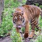 Técnicas de Kung Fu del estilo Tigre