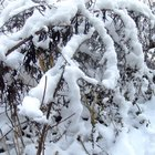 ¿Qué estados de Estados Unidos tienen el clima cálido durante el invierno?