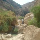 Acerca de los ecosistemas en un oasis del desierto