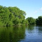 Factores que apoyan un ecosistema estable