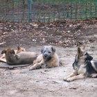 Requisitos para una guardería de perros