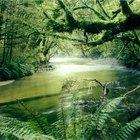 Selva tropical brasileña, plantas y clima