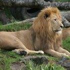 Estatuas famosas de leones