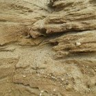 Tratamiento para las picaduras de las pulgas de arena