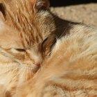 Expectativa de vida de los felinos con problemas renales
