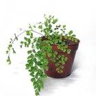 Experimentos con plantas y música