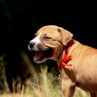 Reacciones alérgicas a la caspa de las mascotas