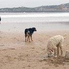 Linfoma terminal en perros