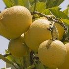 Cómo beber agua con jugo de limón sin dañar el esmalte dental