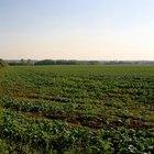 ¿Cuáles son los beneficios de la agricultura?