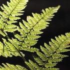 Proyectos de botánica para la feria científica de estudiantes de secundaria