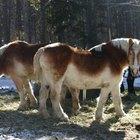 Causas de la tos y la nariz con mucosidad en los caballos