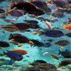 ¿Qué animales viven en hábitats acuáticos?