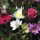 Las flores más baratas para cada mes del año