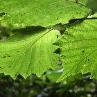 ¿Cómo afecta la luz solar a la fotosíntesis?