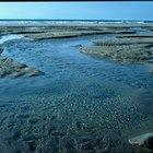 Diferencias entre zooplancton y fitoplancton