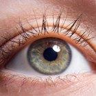 Cuáles son las funciones de la lente en el ojo