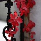 Cómo enseñarles a los niños de pre jardín de infantes por qué los árboles pierden sus hojas en el otoño