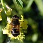 La historia de los repelentes de insectos