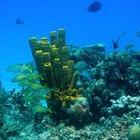 ¿Qué tipo de vegetación se encuentra en los arrecifes de coral?