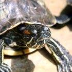 ¿Dónde viven y ponen huevos las tortugas?