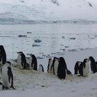 Los animales marinos de la Antártida