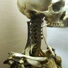 5 Funciones del Esqueleto Humano