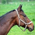 Enfermedades comunes de los caballos