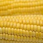 ¿Es el maíz malo para la dieta?