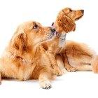 Cómo separar a dos perros que han vivido juntos toda su vida