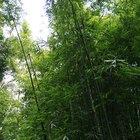 Cómo lijar palos de bambú