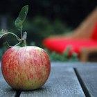 Beneficios para la salud de las manzanas Fuji