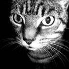 Cómo saber si tu gato está cerca de la muerte
