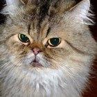 Niveles altos de creatinina en gatos