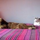 Enfermedades producidas por los excrementos de gato