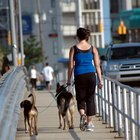 Does a Dog Walker Need to Be Licensed?