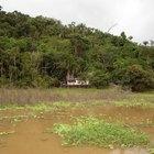 Plantas amazónicas en peligro de extinción