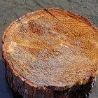 Cómo hacer trabajos con madera con troncos de pino en bruto