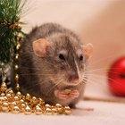 ¿Qué sustancias químicas tiene el veneno de rata?