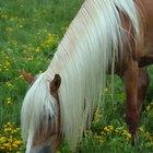 Lista de especies amenazadas de caballos
