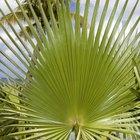 Ciclo de vida de las palmeras