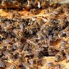Cómo iniciar una granja de abejas de miel