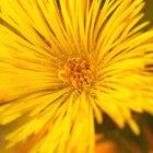 ¿Qué hierbas actúan como antihistamínicos naturales?