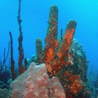 Efectos secundarios del calcio de coral