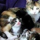 Remedios caseros para la deshidratación de los gatos