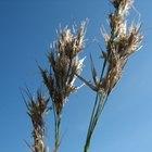 Efectos de la sequía sobre los agricultores