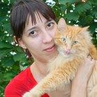 ¿Qué causa la hinchazón y el dolor anal en los gatos macho?