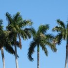 How to Start a Palm Growing Business