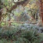 Diferencias entre el bosque templado y la selva tropical